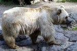 bear-5q4i
